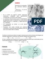 Tema 11 Peroxisomas