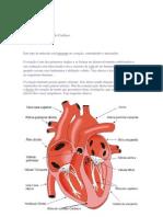 Tec.Muscular Estriado Cardíaco - Resumo