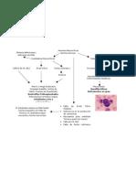 Anemias Macrociticas Normocrómicas