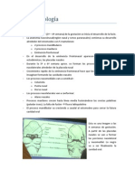 4. Rinosinusología (1)