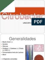 Citrobacter Trabajo 2010 Bacteriologia