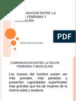 Comparacion Entre La Pelvis Femenina y Masculina