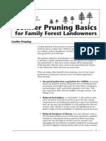 Conifer Pruning Basis