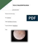 Practica 2 Paleontologia Microfosiles Del Cretacico