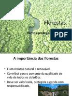 trabalho para o ensino básico sobre as florestas