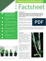 Fusarium and Verticillium Wilts