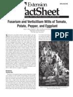 Fusarium and Verticillium