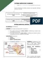 Resumen Del Sistema Nervioso