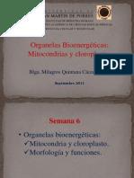 CLASE 6- Organelas Bioenergeticas, Mitocondrias y Cloroplastos