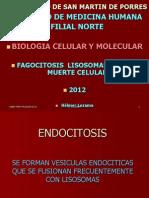 Clase 7- Muerte Celular