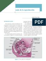 Anatomia de La Reproduccion