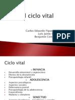 Ciclo Vital