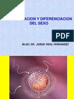Diferenciacion y Determinacion Sexual