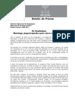 05-01-2011 En Guadalajara, Muérdago, plaga terapéutica para cáncer e hipertensión