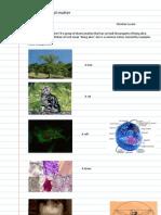 Measuring Biological Matter_2012