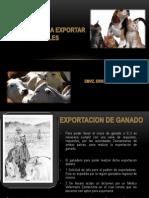 Requisitos Para Exportar Animales
