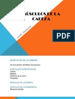 Musculos de La Cabeza - Isabel Marrugo