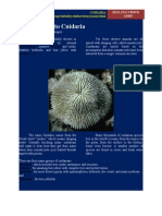 Introduction to Cnidaria NEW!