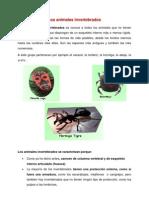 Unidad Invertebrados