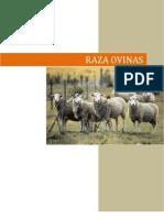 razas ovinas