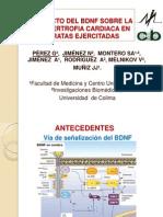 Efecto Del Bdnf Sobre La Hipertrofia Cardiaca-semana Del Medico