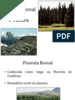 Floresta Boreal e Tundra