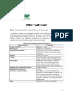 Variedad de papa INIAP-Gabriela (Ecuador)