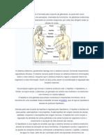O sistema endócrino é formado pelo conjunto de glândulas
