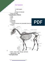 The Equine Skeletal System