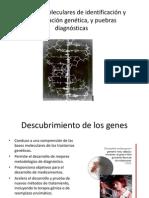 Métodos moleculares de identificación y manipulación genética,