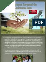 Programa Forestal de Quintana Roo