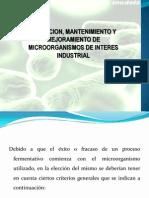 Seleccion, Mantenimiento y Mejoramiento de Microorganismos de Interes Industrial