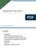 Glándulas Salivales_Gerardo Rodríguez_2B