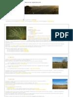 Bioma Cerrado - Noções básicas (1_2)