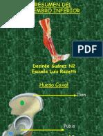 Anatoma Del Miembro Inferior 1228631269692368 9