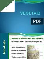 vegetais.ppt
