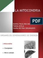 Exposicion Mitocondria