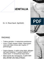 Infeksi Genitalia