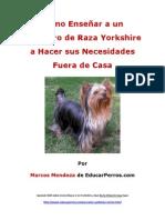 Como Enseñar a un Cachorro de Raza Yorkshire a Hacer sus Necesidades Fuera de Casa