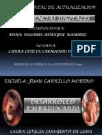 desarrolloembrionario-090608202121-phpapp01