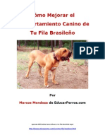Como Mejorar el Comportamiento Canino de tu Fila Brasileýýo