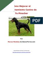 Como Mejorar El Comportamiento Canino de Tu Pinscher