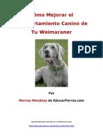 Como Mejorar El Comportamiento Canino de Tu Weimaraner