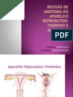 _Revisão de anatomia do aparelho reprodutor