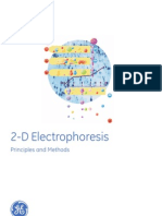 2d Electrophoresis
