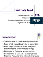 How Animals Feed