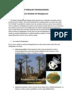 Ny Renala ( Les Baobab)