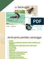 Perilaku Serangga