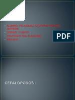 cefalopodos [Vrlasquez]