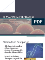 PLASMODIUM-FALCIPARUM